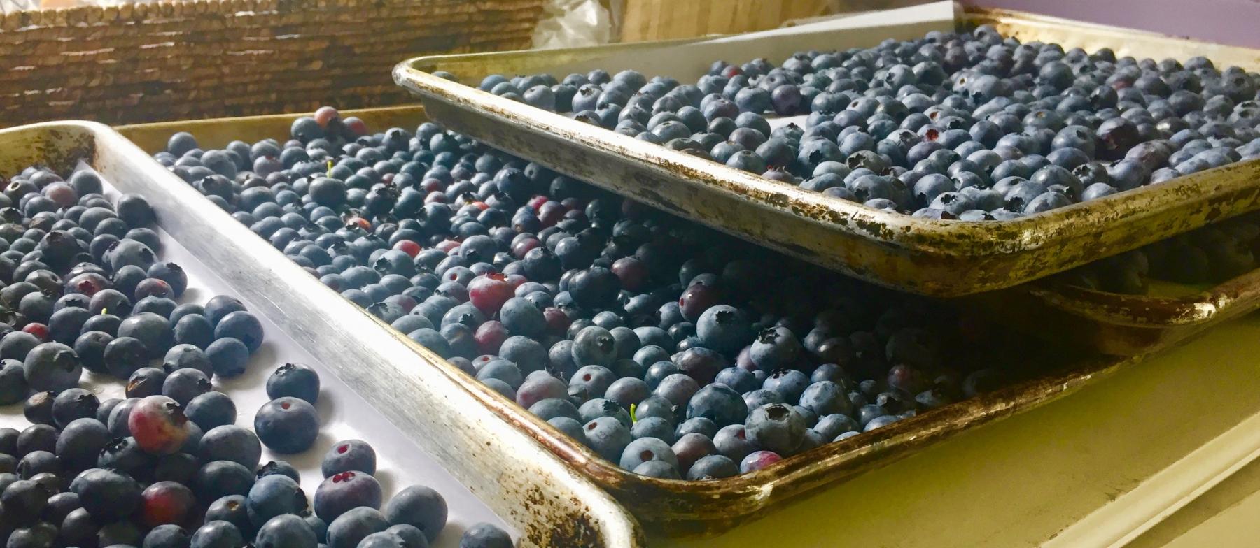Garden Fresh Blueberries