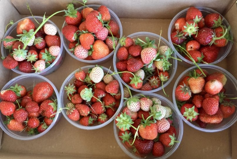 Tart & Delicious Strawberries