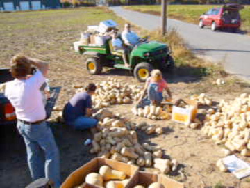 Sorting Through the Endless Amount of Squash